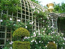 arche de rosier