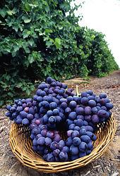 espèces de raisins