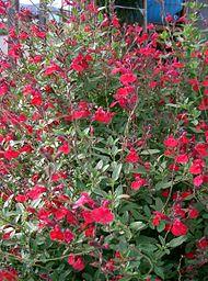 fleurs d ete plein soleil