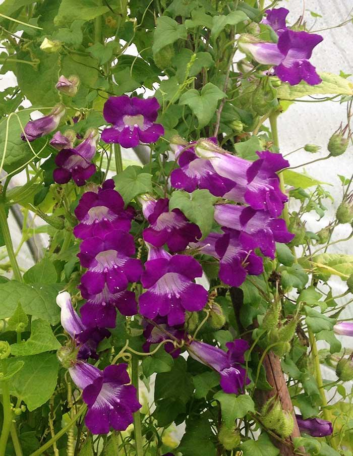 plante grimpante ombre