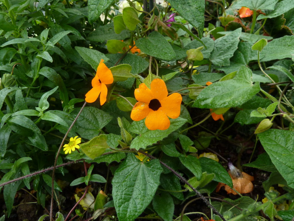 plante vivace en jardinière