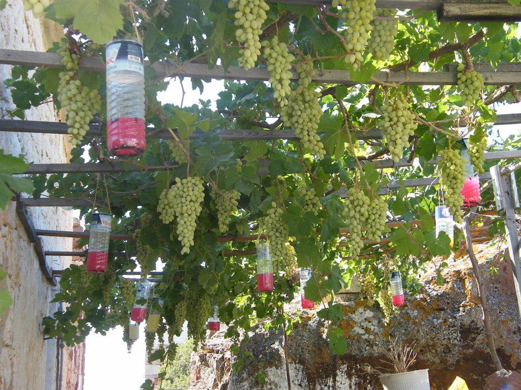 Plantes Grimpantes Pour Grillage - abri jardin bois France