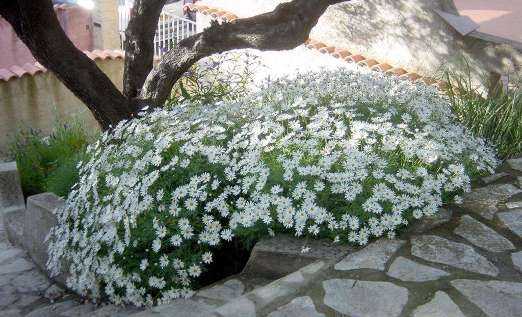 plantes vivaces qui fleurissent longtemps